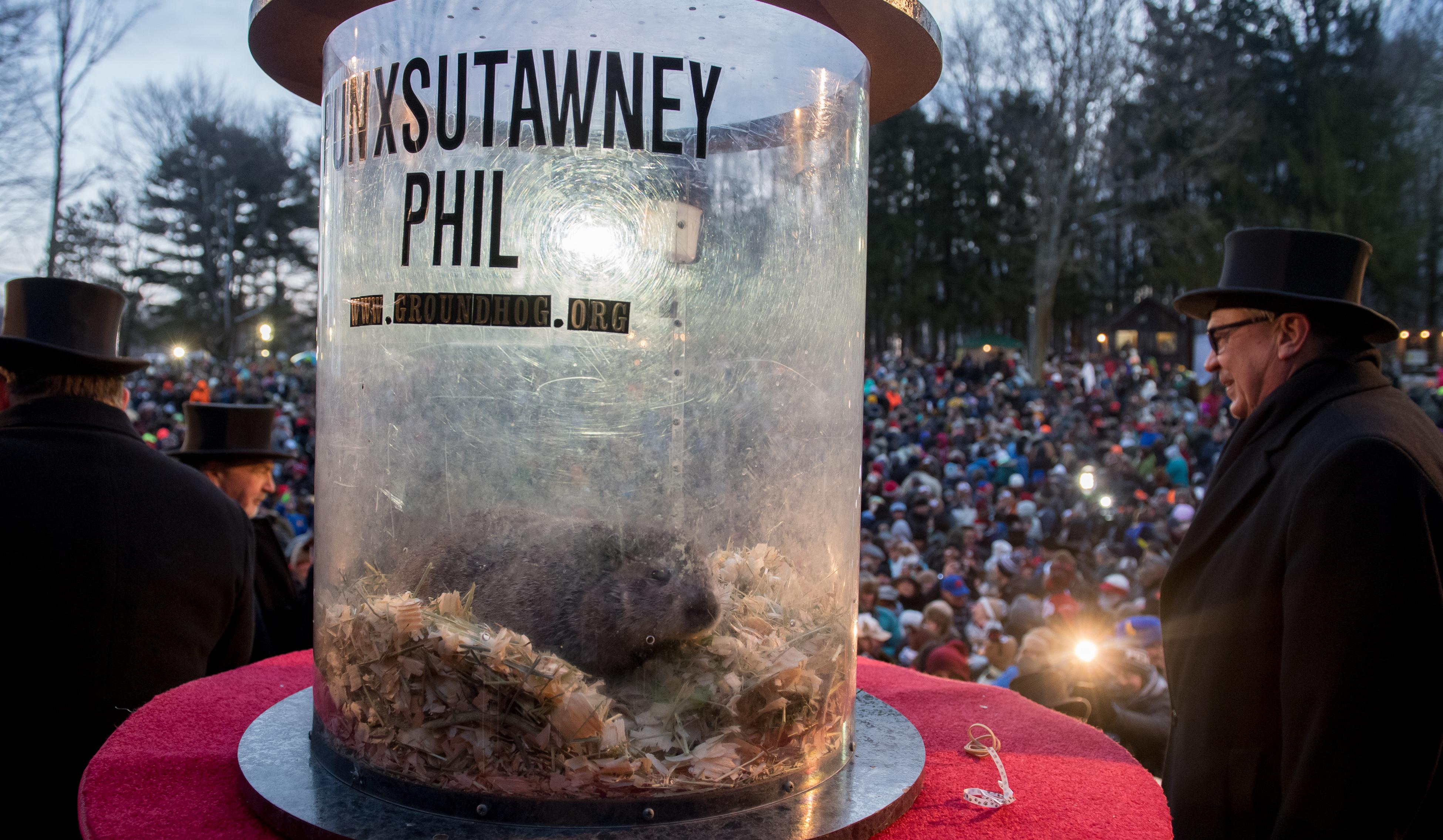 Say It Ain't So: Punxsutawney Phil Predicts 6 More Weeks