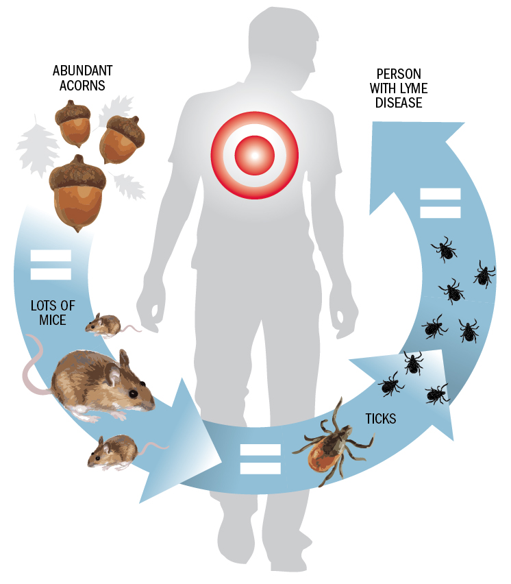 What's to blame for the surge in Lyme disease? | Pittsburgh