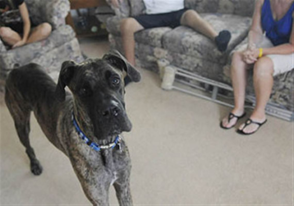 A Dog Named Chemo Is Good Therapy Pittsburgh Post Gazette