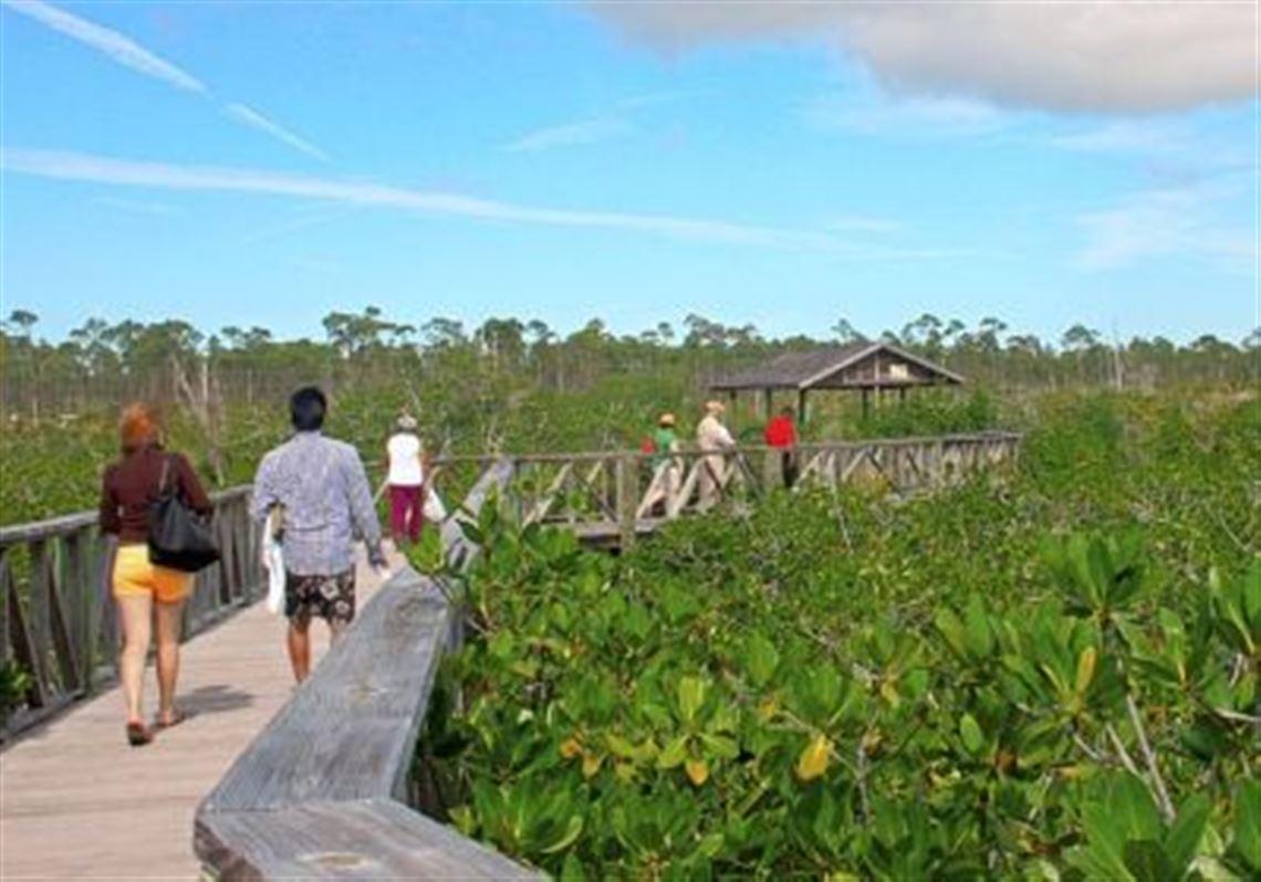 Mangrove-swamp-boardwalk