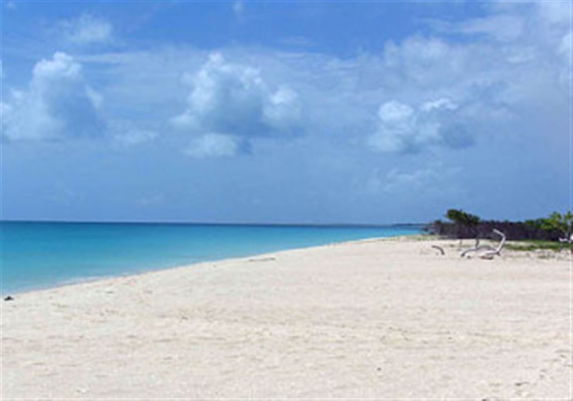 Palm Beach On Low Bay The Island Of Barbuda A 17 Mile Long