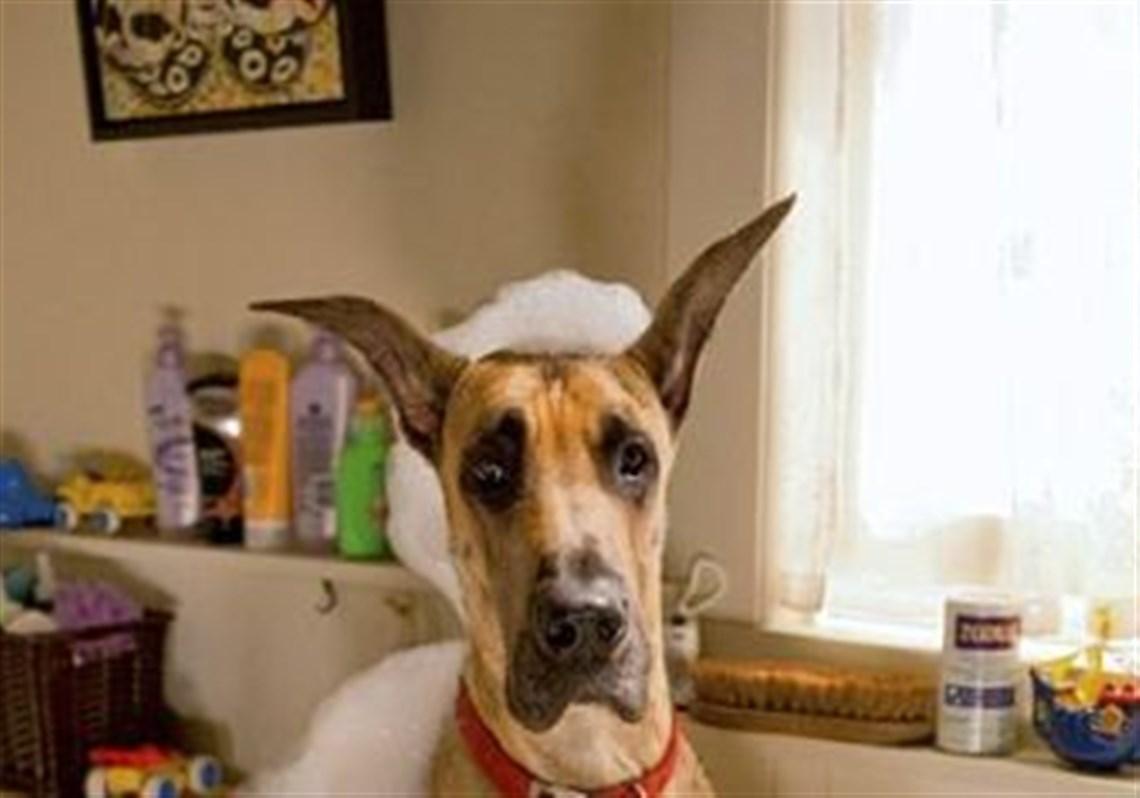 Dog Breeds Used In Marmaduke Movie