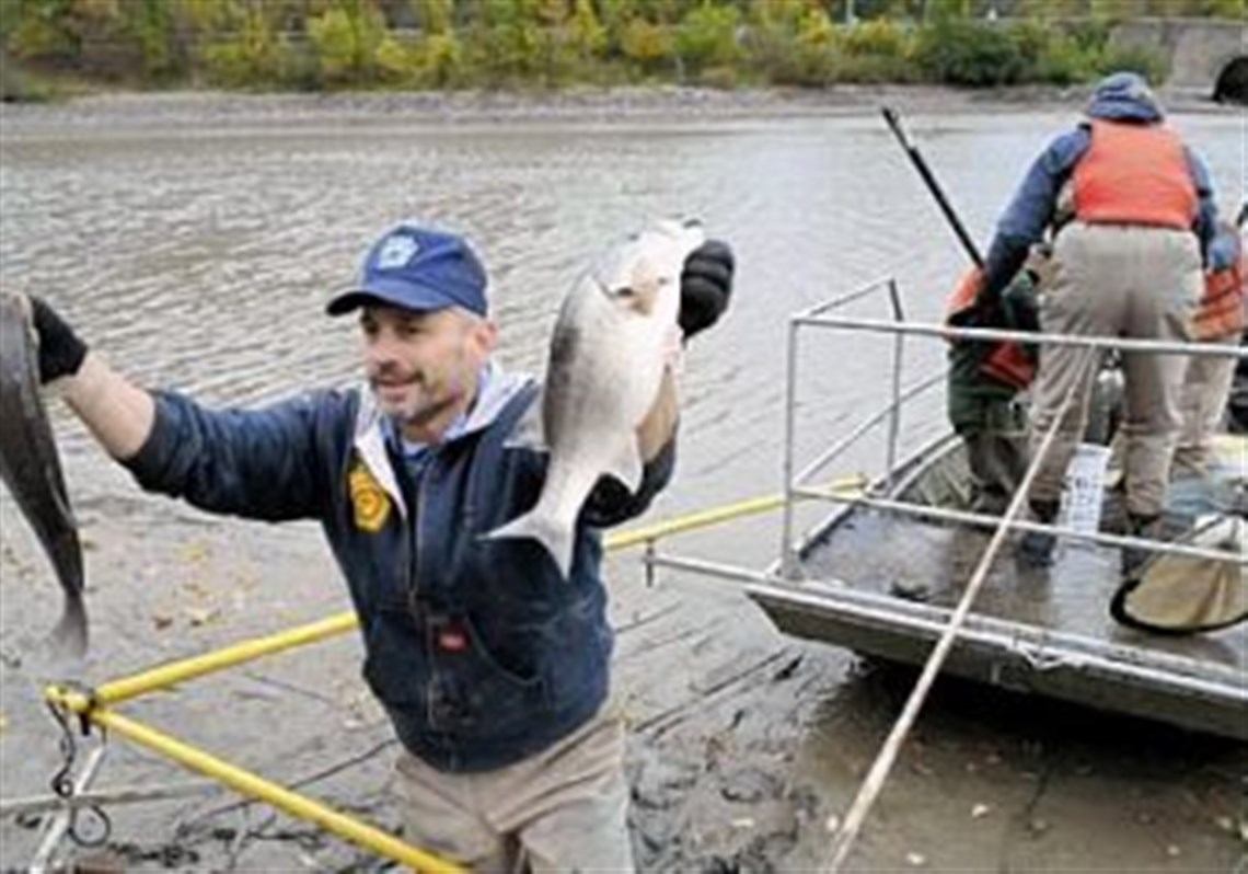 Rick Lorson Of The State Fish And Boat Commission Displays Two Bass Rescued From Shrinking