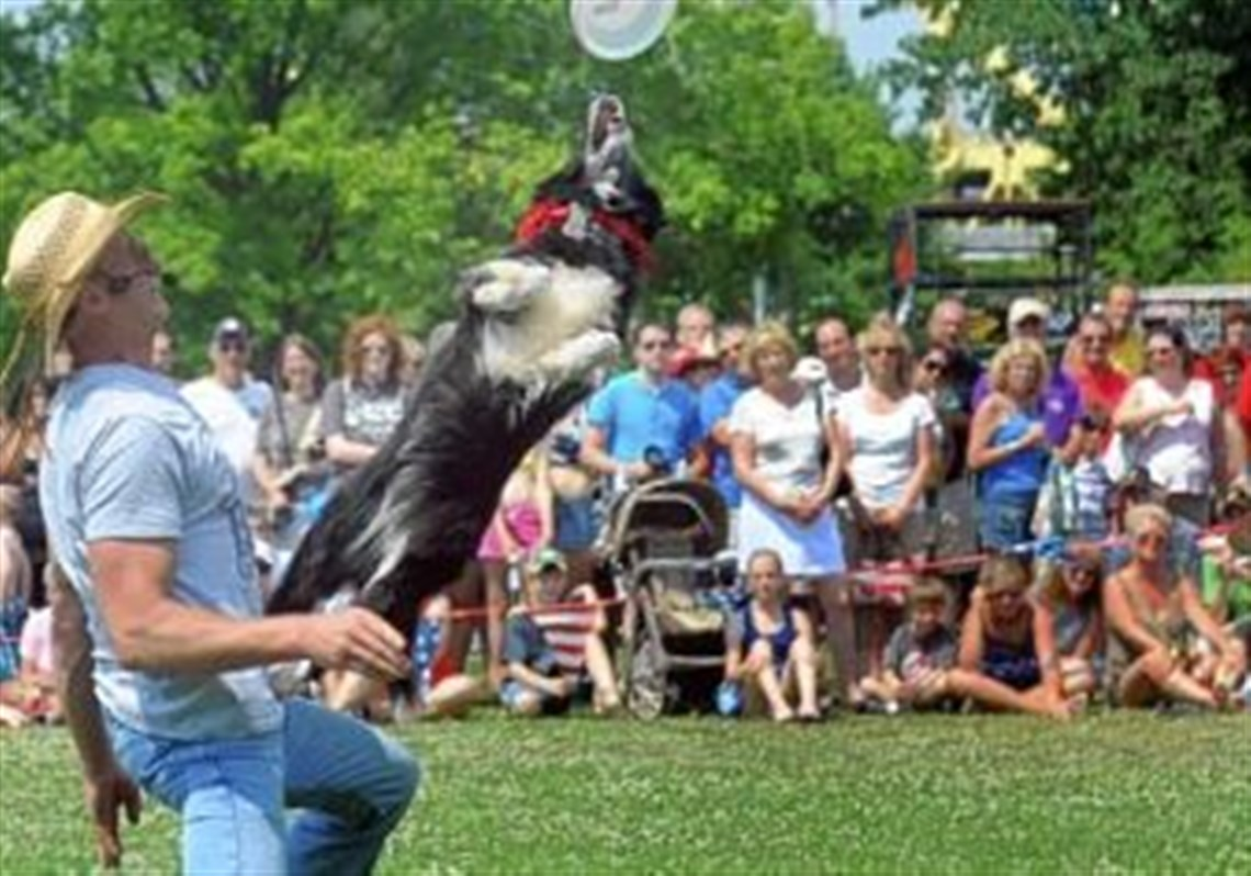 Missy The Missile, A Collie Mix, Jumps Off Trainer Tad Bowen's Lap To Catch  1 Frisbeecatching Dogs