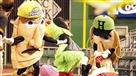 Pirate Parrot and the pierogies photo