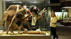 "Suzanne McLaren of the Carnegie Museum of Natural History with the venerable ""Arab Courier Attacked by Lions"" exhibit in 2009."