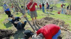 The Pittsburgh Sakura Project members plant trees in Cranberry.