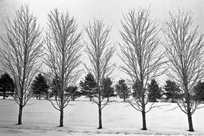 "Bob Patterson ""Trees in Winter,"" by Bob Patterson."