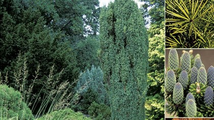 "'Conifers for Gardens' photo ""Conifers for Gardens"" by Richard L. Bitner."