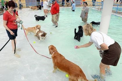 Doggie paddle The shallow end of the Crafton pool was filled with dogs Sunday afternoon to raise money for repairs.