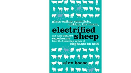 'Electrified Sheep'