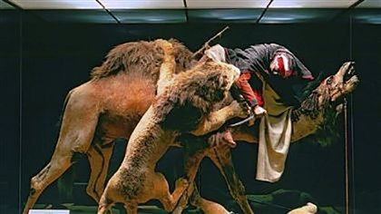 "Fair 4 The diorama, ""Arab Courier Attacked by Lions,"" a high point of countless school tours at the Carnegie Museum of Natural History, was created by renowned taxidermist and naturalist Jules Verreaux for the 1867 Exposition Universelle in Paris, where it won the gold medal for excellence. It depicts a man in North African dress atop a camel and fighting an attacking Barbary lion, now an extinct species."