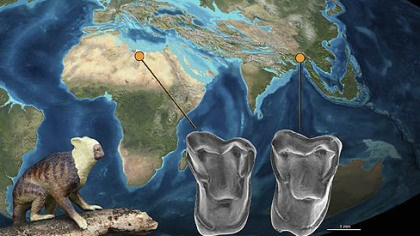 Fossil find An illustration showing the relationship between archeological finds in Africa and recently, Myanmar. Nearly indentical teeth belived to be from related species were found in Africa and Asia, supporting a theory that early human ancestors migrated from Asia to Africa.