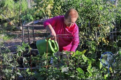 Gardening_5 Dolores Meara waters the green beans, beets and tomatoes she planted with her daughter, Catherine, in their plot in the Penn Hills Community Garden off Jefferson Road in Penn Hills.