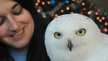 "national aviary fleury owl Cathy Schlott, manager of animal training at the National Aviary, poses with Fleury, a 2-year-old snowy owl. Fleury will be appearing with fellow Aviary resident, Simon, an African penguin, on Tuesday's ""Today"" show."