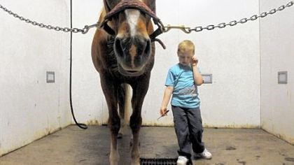 Nickers 'n Neighs Timmy Langer, 6, of Irwin, pauses before cleaning the hooves of Buddy at Nickers 'n Neighs, a therapeutic riding center in Westmoreland County. Timmy, who has autism, learns to ride and take care of horses at the center, a nonprofit that uses horses to promote cognitive, social and emotional well-being for people who have disabilities.