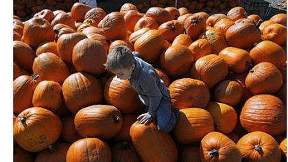 Pumpkins Anthony Maiello, 4, of Peters watches his footing as he climbs the pumpkins at Trax Farms in Finleyville on Thursday. The 43rd Trax Farms Fall Festival starts today and will run through Oct. 28.