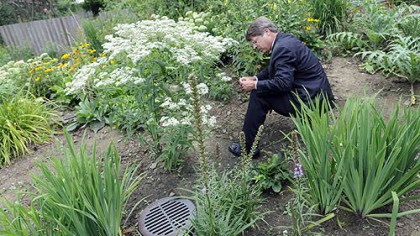 Reading the tag Richard Piacentini reads the identifying tag of a boneset plant in his rain garden.