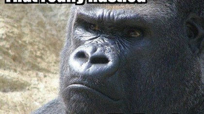 Rustled My Jimmies Rustled My Jimmies: A goofy 1950s phrase usually featuring a frowning gorilla.