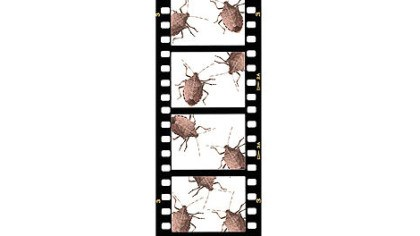 Stink bug The reviled stink bug is the subject of this year's Film Kitchen Contest Show.