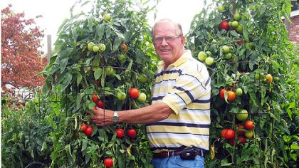 Virg Lucas Virg Lucas with his tomato plants last summer.