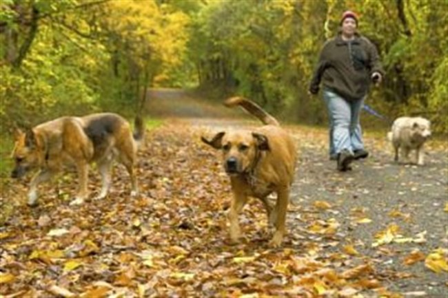 Some parks feature a free-run area for dogs.