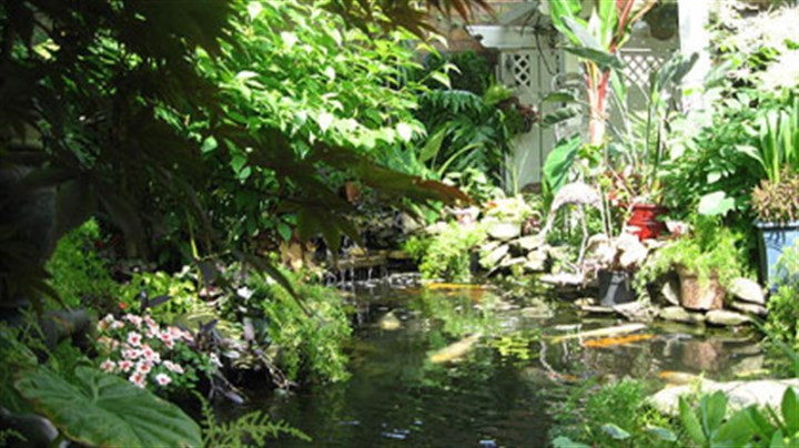 Gardens galore on buffalo tour pittsburgh post gazette for Koi gazette