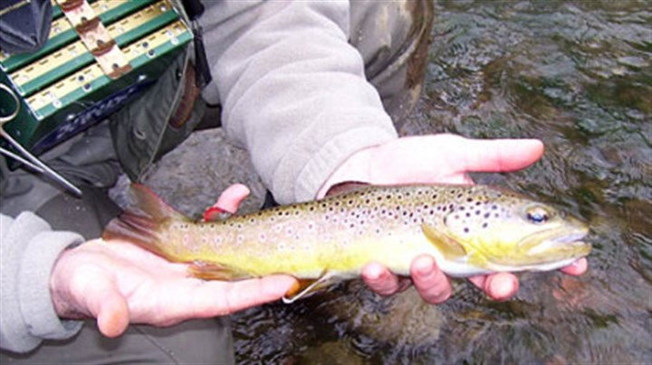 State adopts trout management agenda similar to for Pa fish stocking