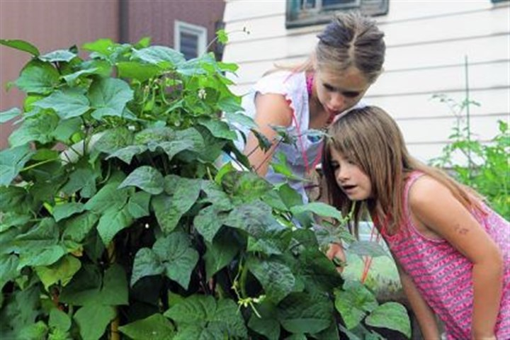 At the garden Faith Jacoby, 10, in white, and Kaylin Moss, 6, in stripes, search for string beans at the garden behind the Millvale Community Library in Millvale on Tuesday.