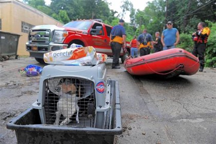 beagle sits in crate Scruffy, a beagle belonging to an Elizabeth resident, sits in a crate Wednesday while waiting for transportation to a veterinarian?s office. Emergency crews removed the animal from a flooded area on Irwin Street.