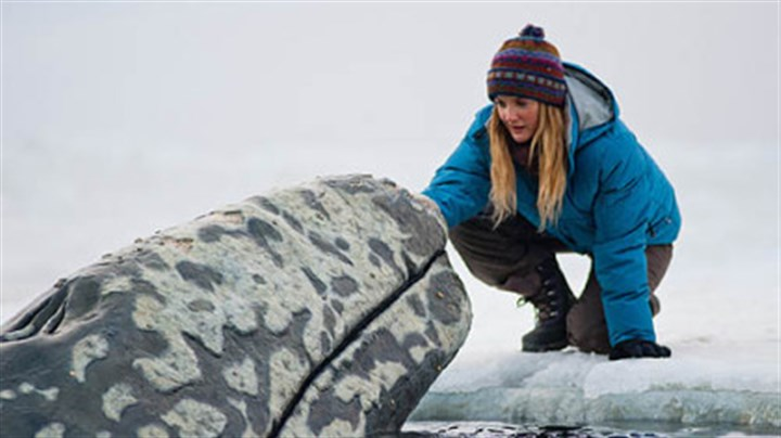 "'Big Miracle' Drew Barrymore offers comfort to one of the trapped whales in the rescue adventure ""Big Miracle."""