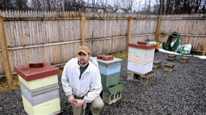 Burgh Bees Steve Rapasky, director of the Burgh Bees community apiary on Susequanna Street, poses for a portrait inside the apiary Monday. Rapasky lives in Dormont.