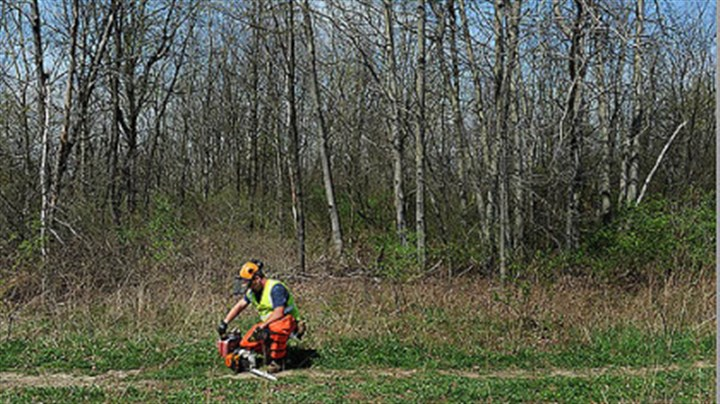 chesapeake A crew cuts down trees on the property of Kevin and Connie McRoberts of Darlington Township in March.