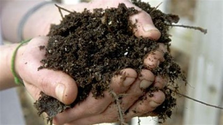 Compost Compost is OK for houseplants, but if it isn't completely broken down, nuisance insects may come inside with it.