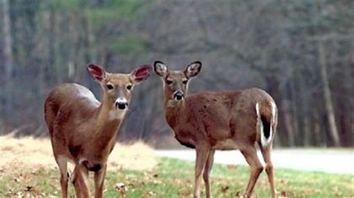 Deer are accustomed to sounds Deer are accustomed to sounds from their natural environment and are alerted by sounds that seem unfamiliar or out of place.