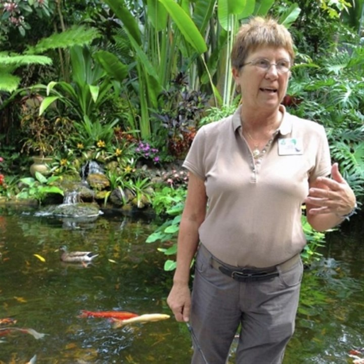 Denise Leschinski Volunteer Denise Leschinski leads her tour to the koi pond at Selby Gardens.