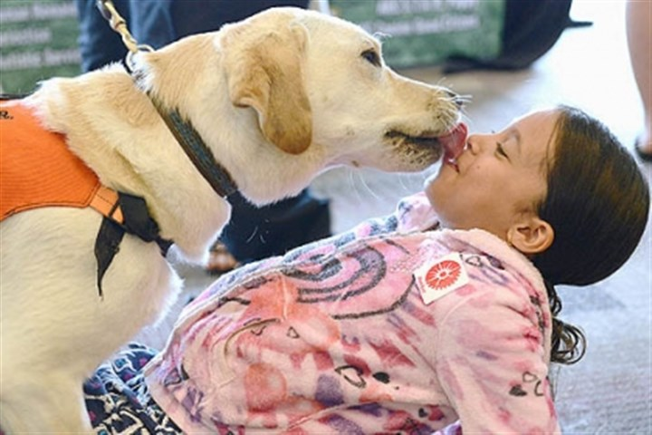 dog friends uma simhan Uma Simhan, 8, of Point Breeze is bent over backwards with kisses from Hank.