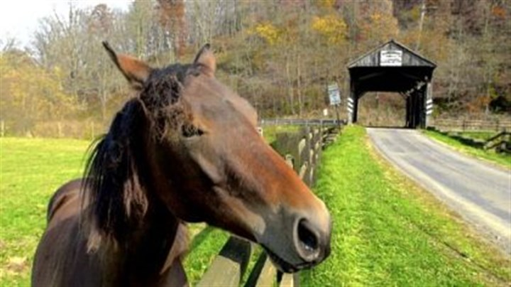 Horse play at the Woods bridge A horse grazes in the pasture next to the Woods Covered Bridge in Greene County.