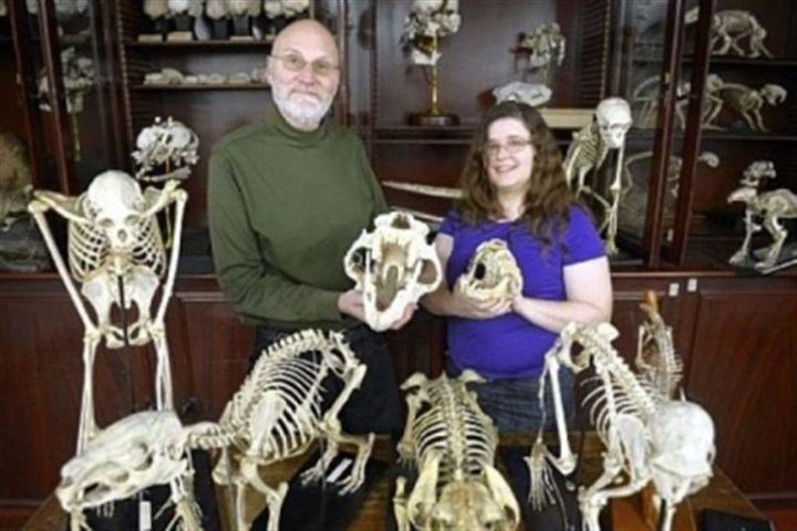 John Wible John Wible and Michelle Spaulding participated in creating the Tree of Life, which includes DNA and anatomical descriptions of placental mammals. Scientists hope the Tree of Life helps enter details of fossils or animals they discover and determine where it fits into the Tree of Life, including what family of animals it is associated with and even when it most likely existed.