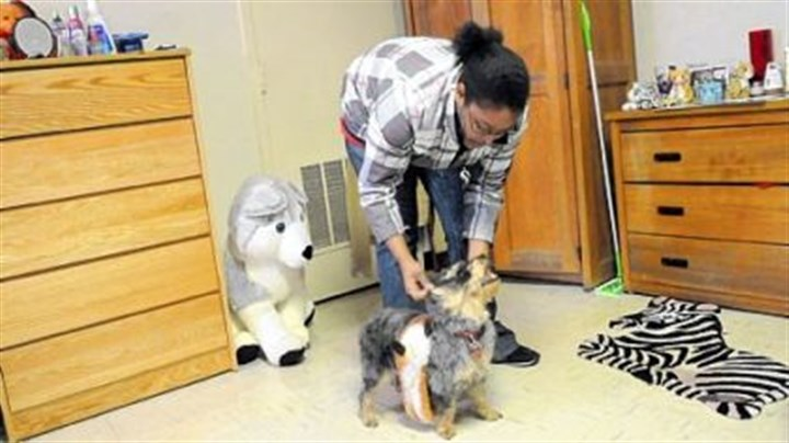 Lady's luck Sophomore Michelle Kelly, 19, of Severn, Md., plays with Lady, her 3-year-old Yorkie-Poo, in her dormitory at Washington & Jefferson College.