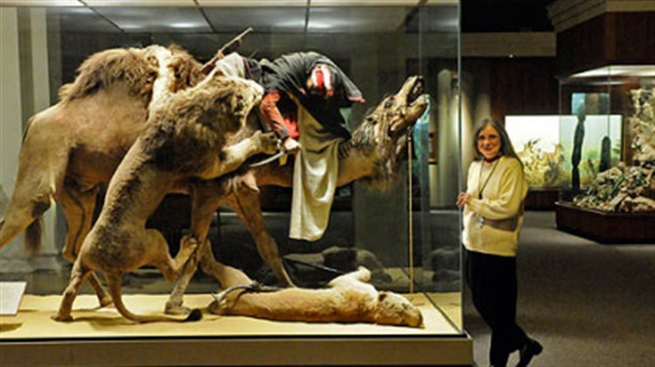 "Man, camel, lion -- oh my Suzanne McLaren, manager of the Carnegie Museum of Natural Historys mammal research collection, with the venerable ""Arab Courier Attacked by Lions"" exhibit. It will become the first in a series of Carnegie Memories snow globes."