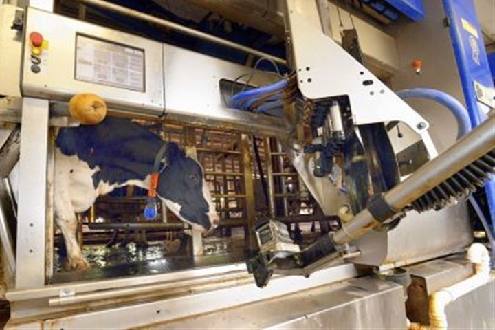 Move into the machine A cow enters one of the robotic milking machines, top, at the Kepple family's dairy farm in Salem, Westmoreland County. A tag on the animal tells the machine which one of the herd it is, and the machine adjusts to the animal.