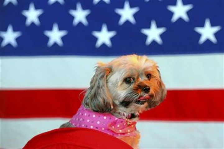 Patriot pooch Patriot pooch, Miss Prissy, a 4-year-old Lhasa apso, gets a patriotic portrait taken to benefit the annual Crafton Park festival.
