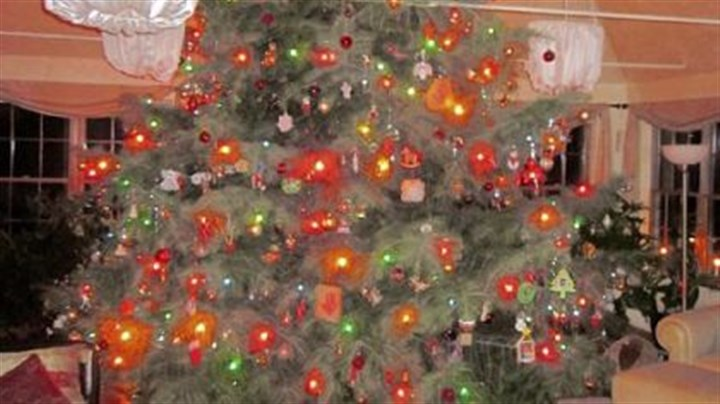 Percharka tree David Pecharka of Moon has a live Christmas tree that is 15 feet tall and more than 12 feet wide at the base.