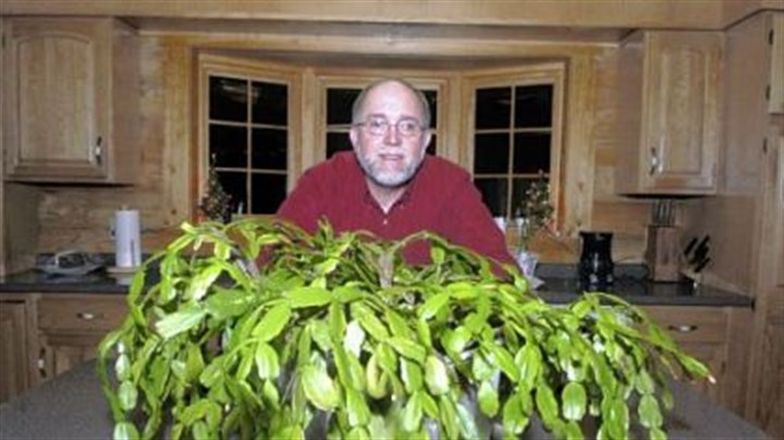 Rich Gebrosky of Murraysville Rich Gebrosky of Murraysville with a Christmas cactus that dates back to 1914.