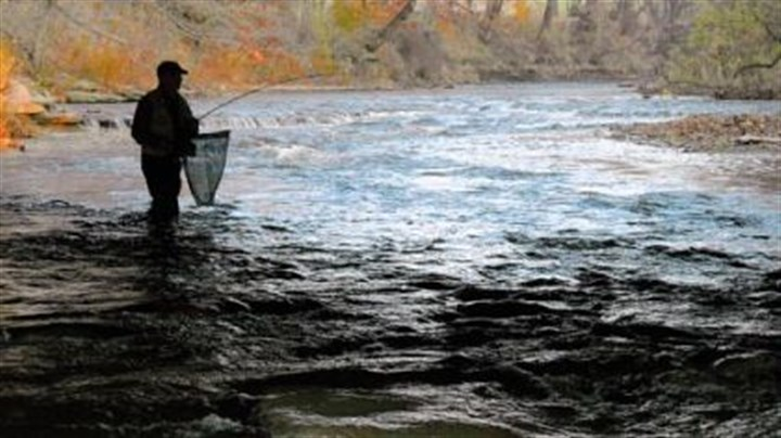 "Salmon runs ""The old timers remember the salmon runs, and some anglers have been asking us for a little more diversity again."" -- Chuck Murray, Pennsylvania Fish and Boat Commission biologist"