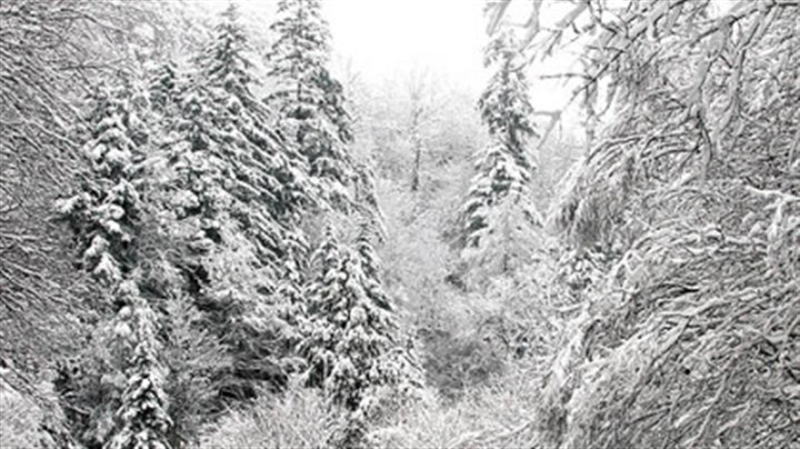 Smoky Mountain snows Snow-covered trees are seen after an overnight storm Oct. 29, 2012, in the Great Smoky Mountains National Park, near Gatlinburg, Tenn. (AP Photo/Knoxville News Sentinel, J. Miles Cary)