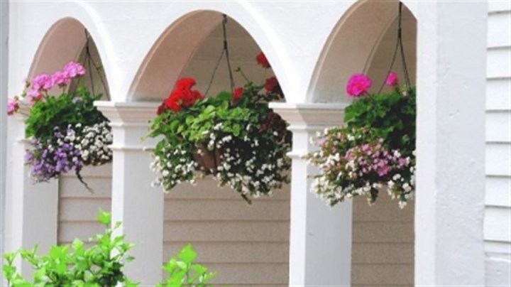 Summer baskets Ferns are lush and appealing but baskets packed with floral color really create a show.