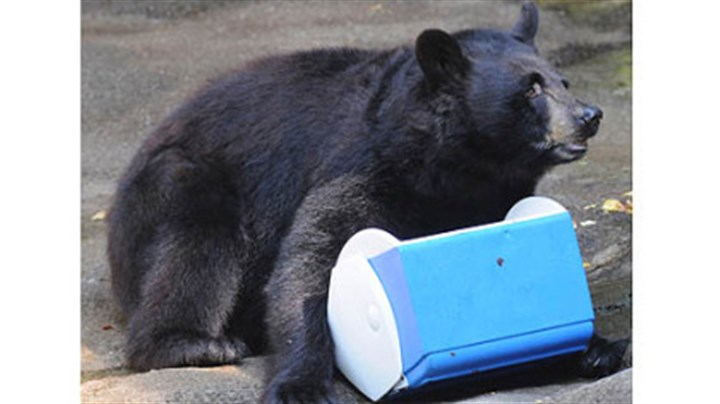 susan the bear The Pittsburgh Zoo & PPG Aquarium used Susan (pictured) and Stanley, the zoo's two black bears, to demonstrate what hungry bears can do to a campsite if food is left in the open.