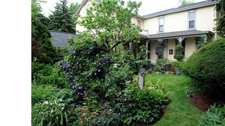 The Cox backyard The backyard looking toward the back porch. The free-standing pear espalier is in the foreground.